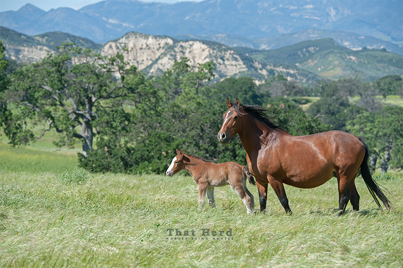 wild horse photography of a mare and new foal with scenery