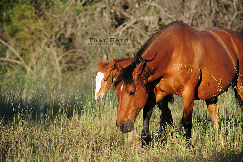wild horse photography of a lovely mare and serious colt