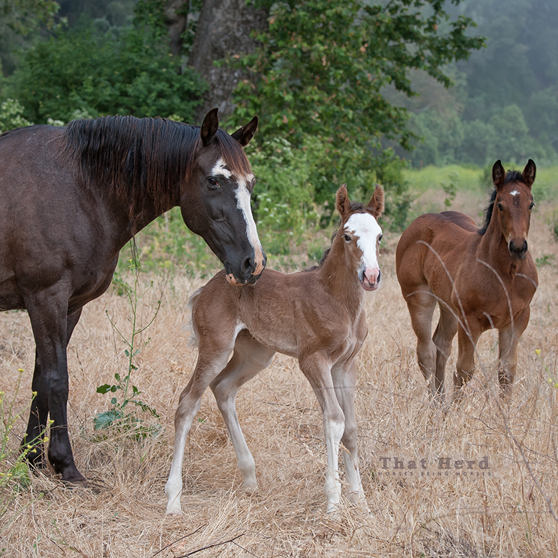 wild horse photography of a large newborn