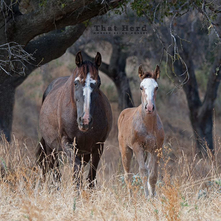 free range horse photography of a mare and foal in the woods