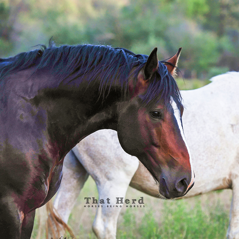free range horse photography of a young stallion portrait