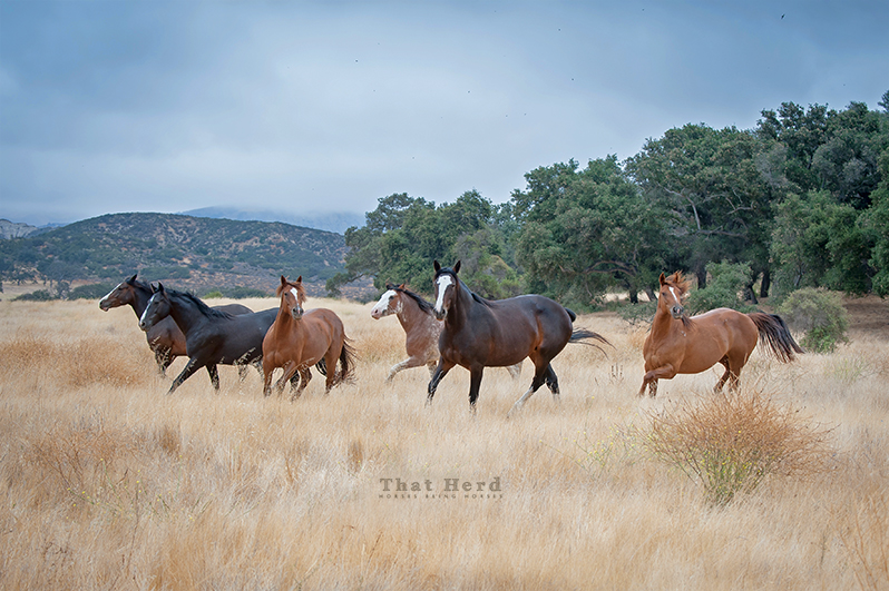 free range horse photography of wacky mare behavior