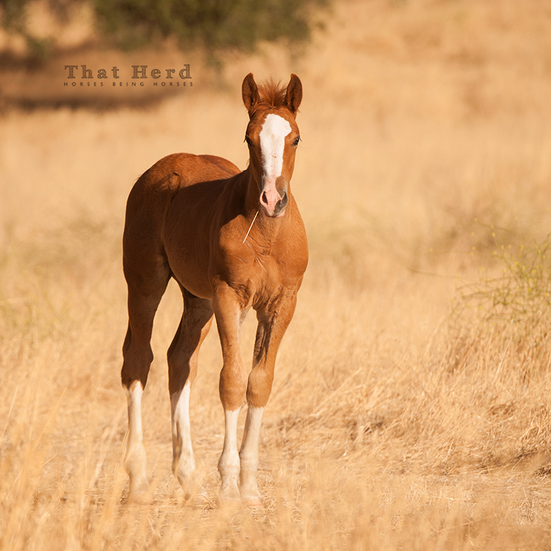 free range horse photography of an attractive colt