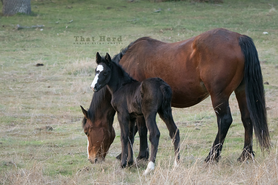 free range horse photography of a mare and newborn filly