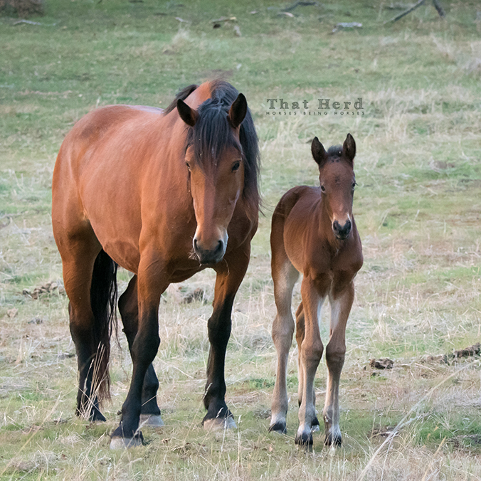 free range horse photography of a new foal