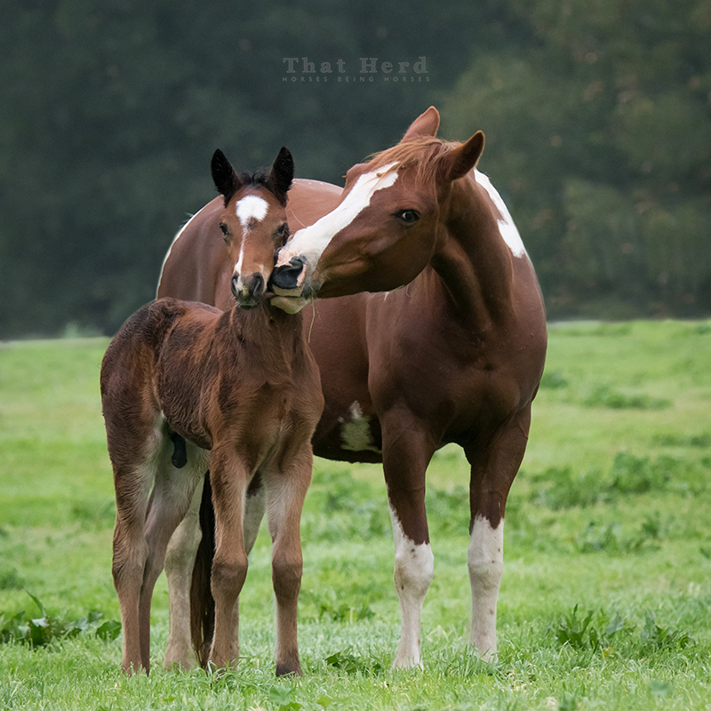 free range horse photography of a mare and new colt