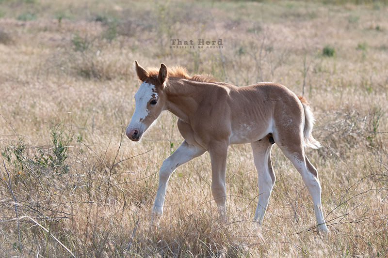 free range horse photography of a new colt