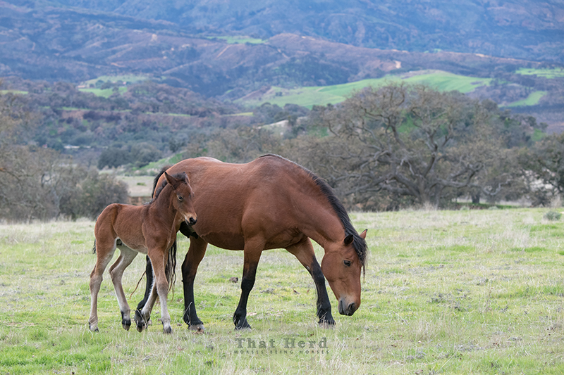 free range horse photography of a mare and foal in a vast landscape