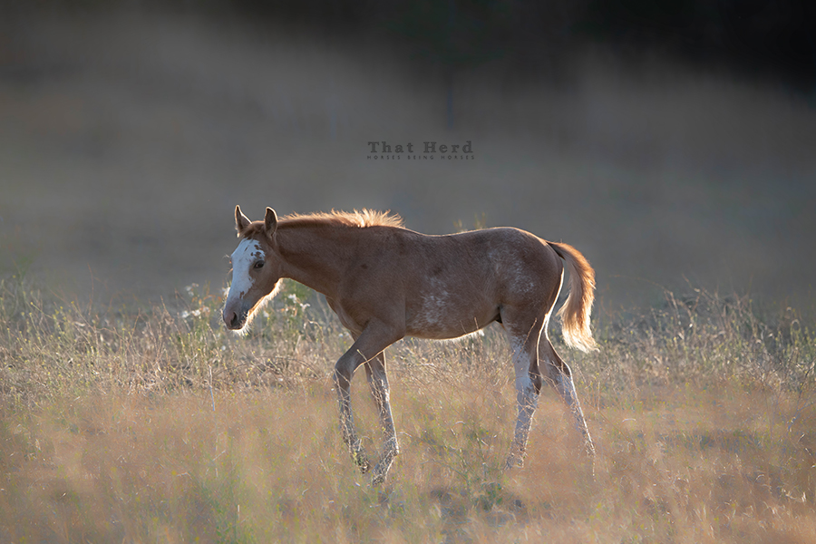 free range horse photography of a flashy colt