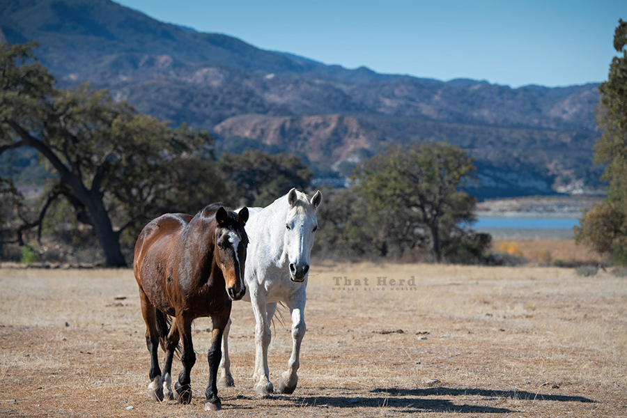 free range horse photography of two mare buddies
