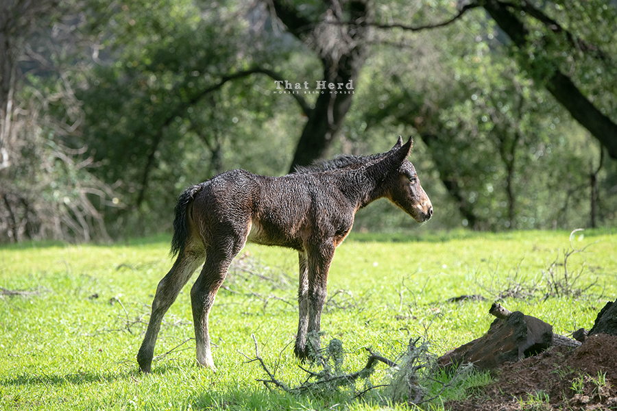free range horse photography of a new foal after rain