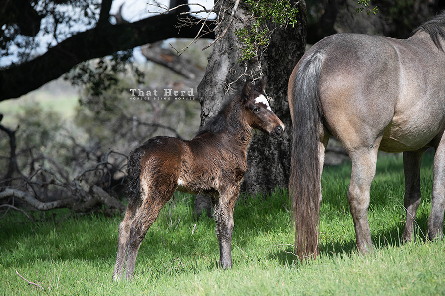 free range horse photography of a week-old filly