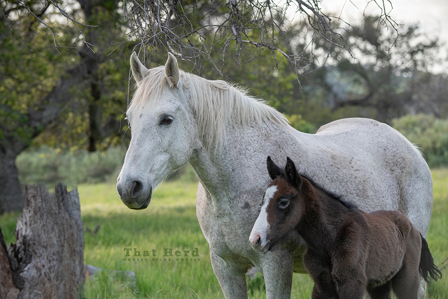 free range horse photography of a proud mare and her newborn colt