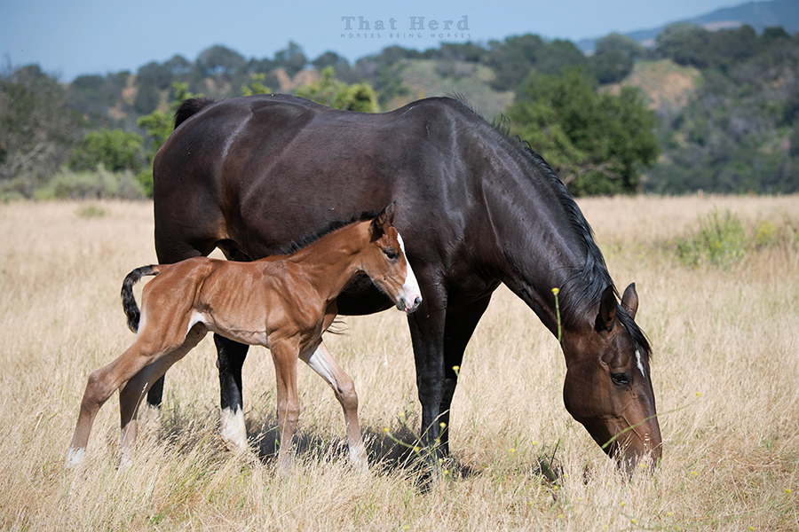 free range horse photography of a large newborn foal with a long face