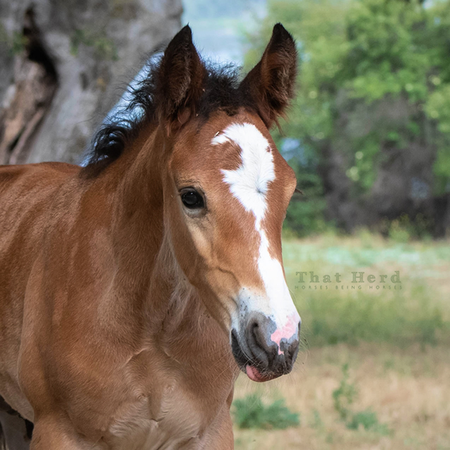 free range horse photography of a colt with unusual face marking