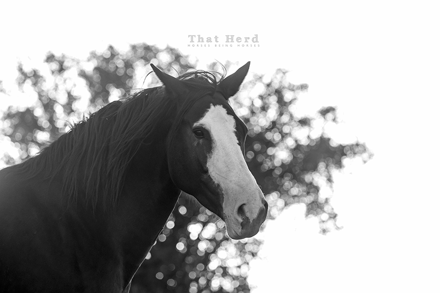free range horse photography of a young, hot-blooded mare