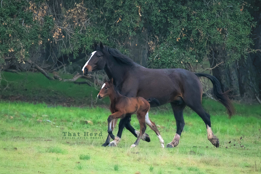 free range horse photography of a mare and January foal