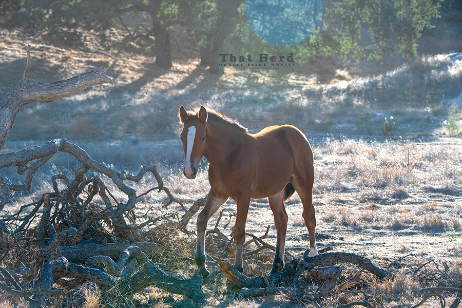 free range horse photography of a filly who loves discovery