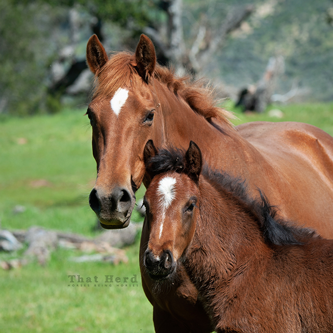 free range horse photography portrait of a mare and foal