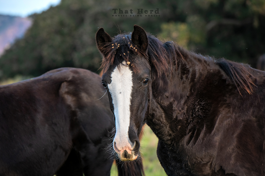 free range horse photography portrait of a weanling filly