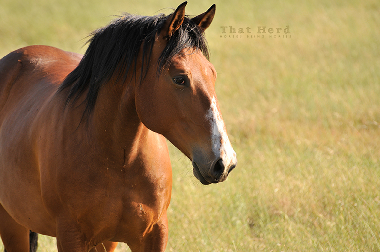 free range horse photography of a strong young colt