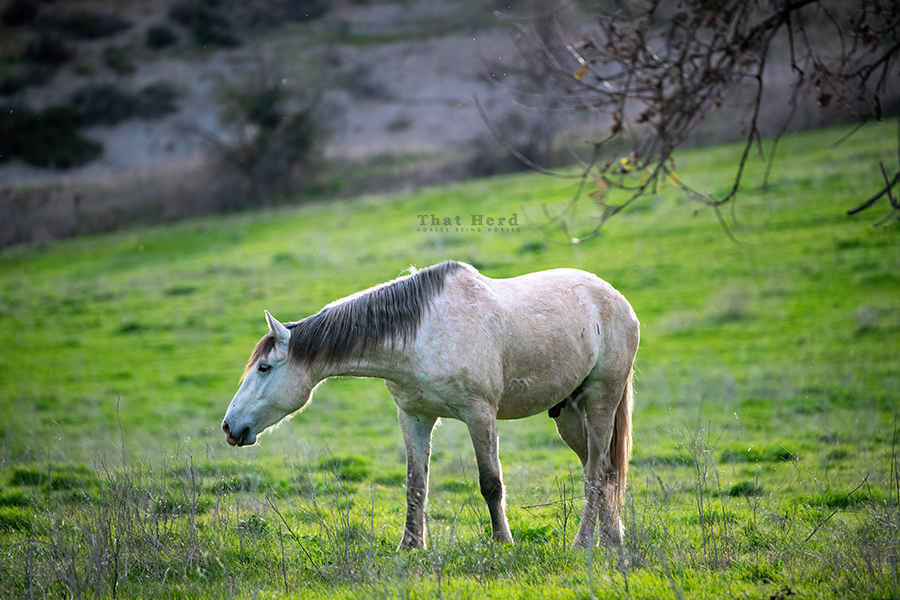 free range horse photography of a horse in late day light