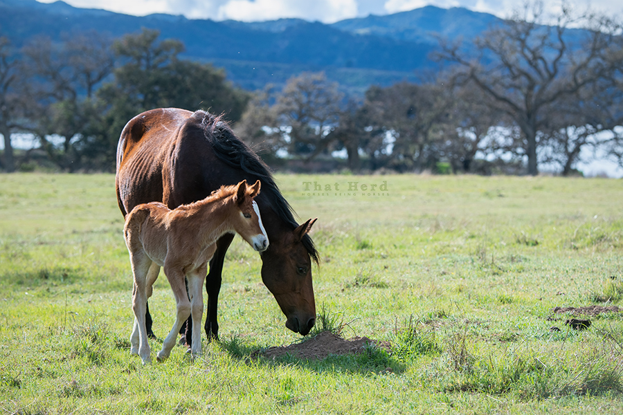 free range horse photography of a mare and her new foal in a beautiful meadow