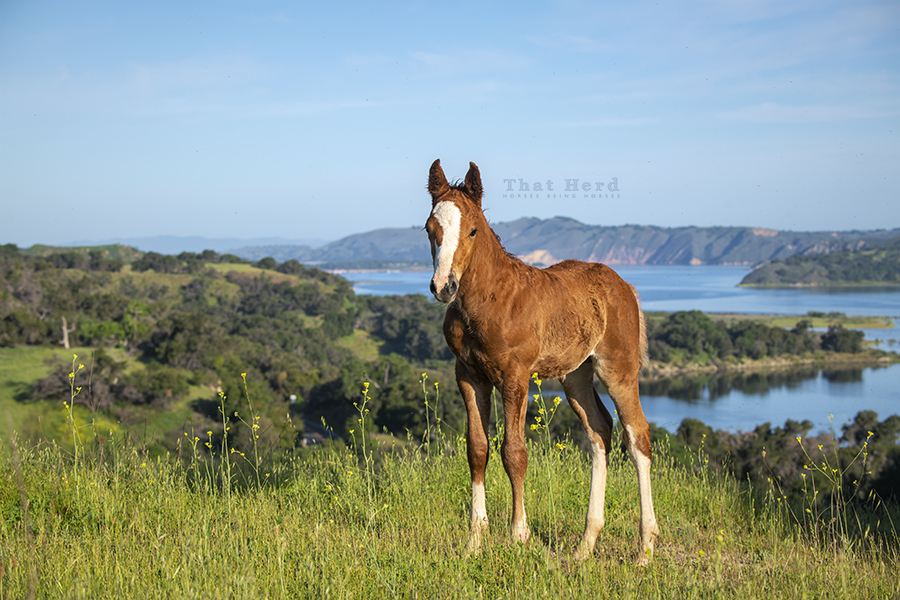 free range horse photography of a flashy colt in stunning scenery