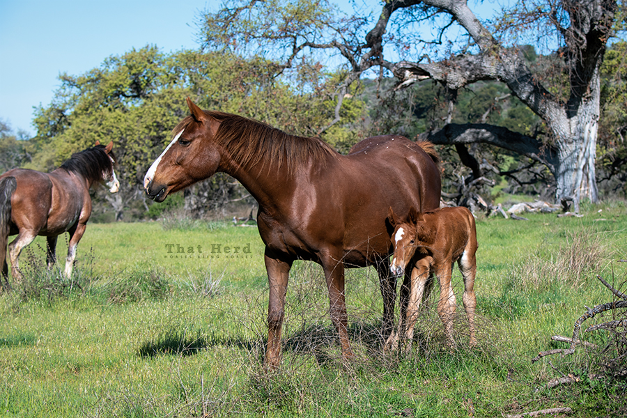 free range horse photography of a veteran mare and her new filly