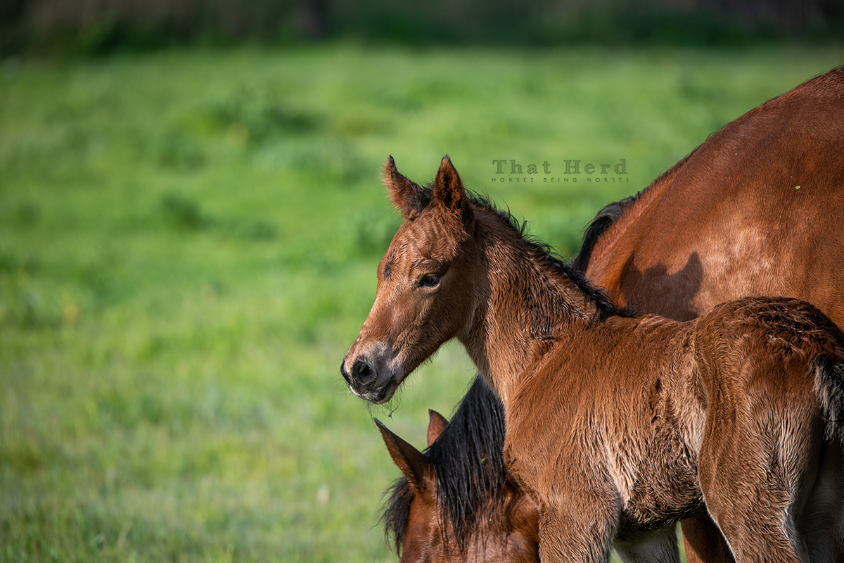 free range horse photography of a large newborn colt