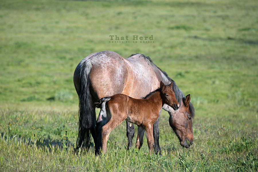 free range horse photography of a newborn foal on a beautiful morning