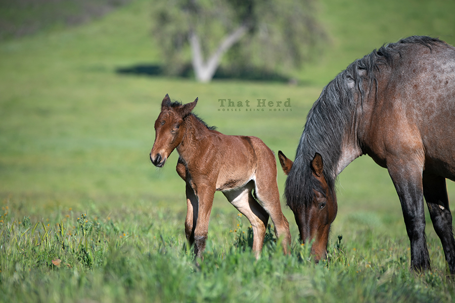 free range horse photography of a foal napping in sunshine