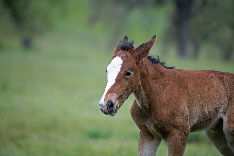 free range horse photography of a newborn filly absorbing her surroundings