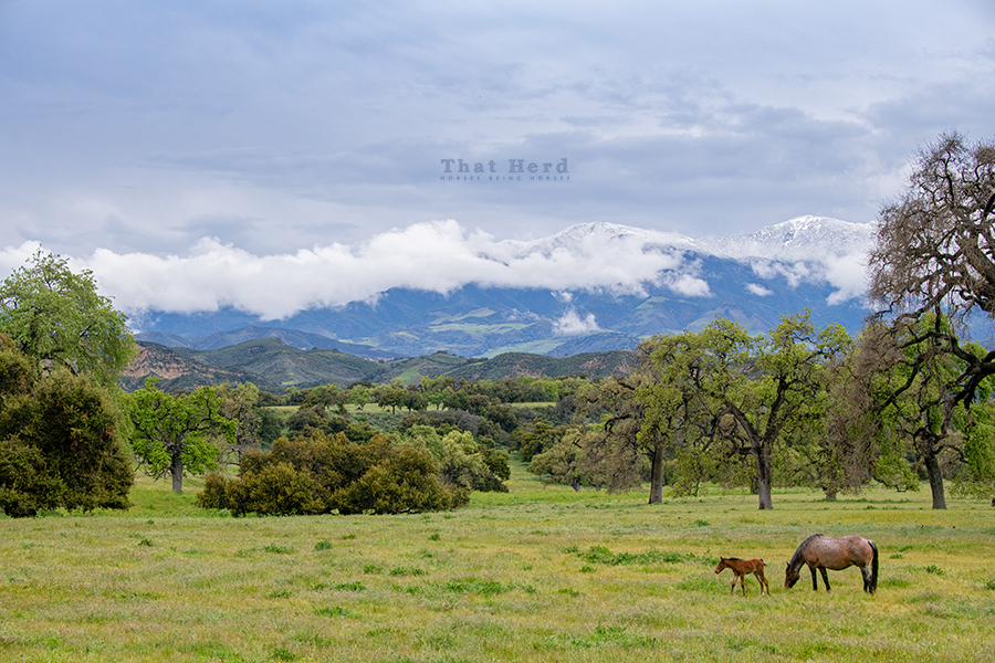 free range horse photography of a mare & new foal in spring landscape