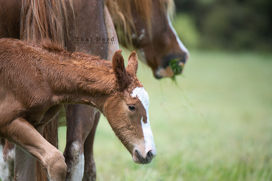 free range horse photography of a newborn colt's face