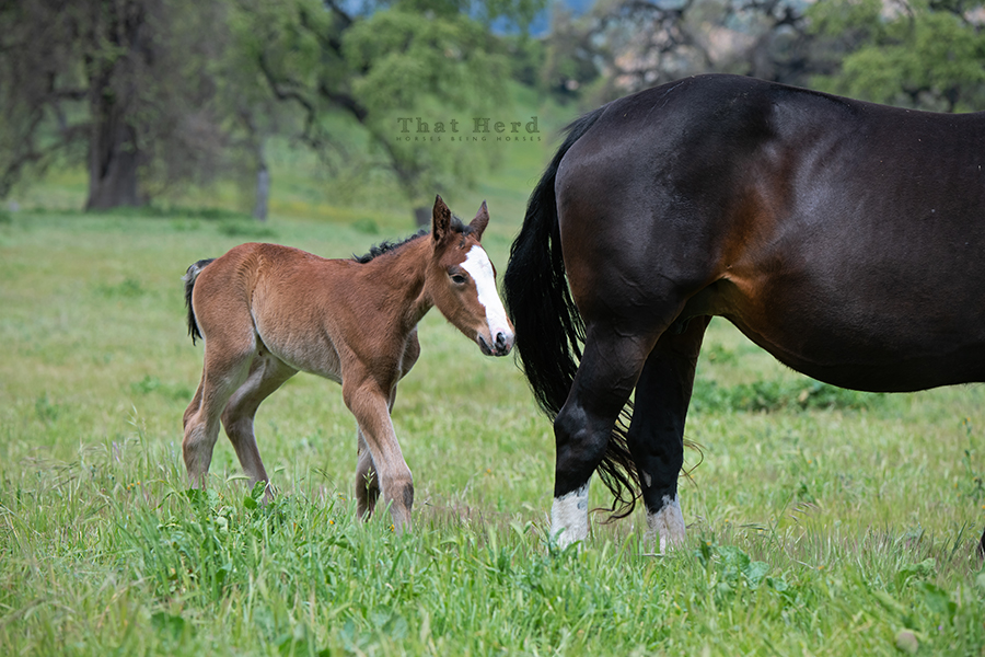 free range horse photography of a flashy newborn filly