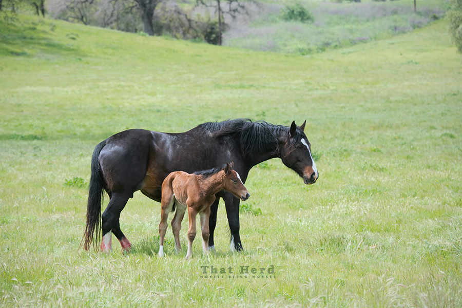 free range horse photography of a mother and her neonate colt