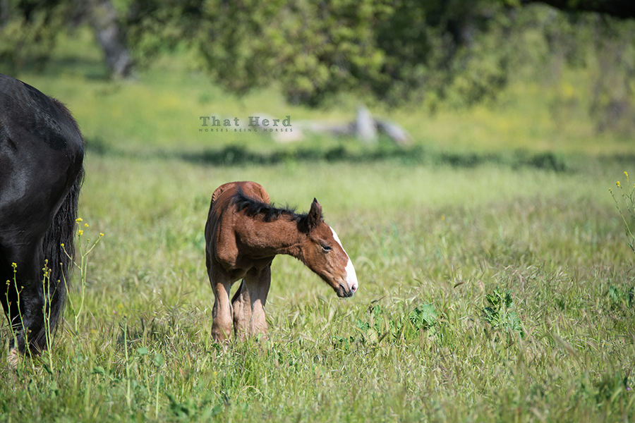 free range horse photography of a newborn with a lot of head to grow into