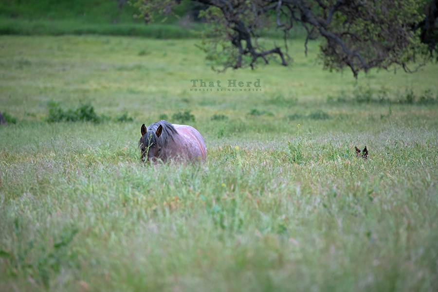 free range horse photography of a mare and foal concealed in tall grass