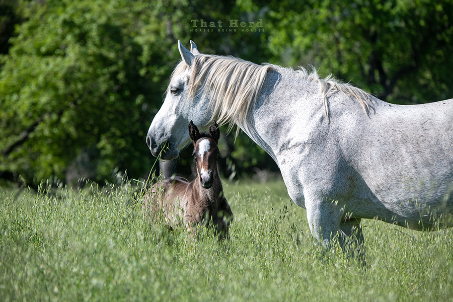 free range horse photography of a new foal and his beautiful mother
