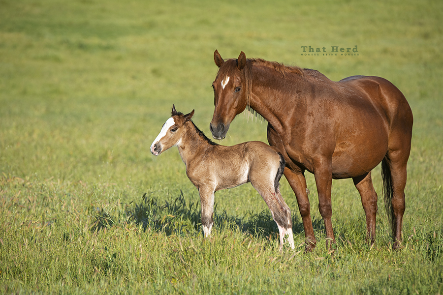 free range horse photography of a proud mare and her new colt