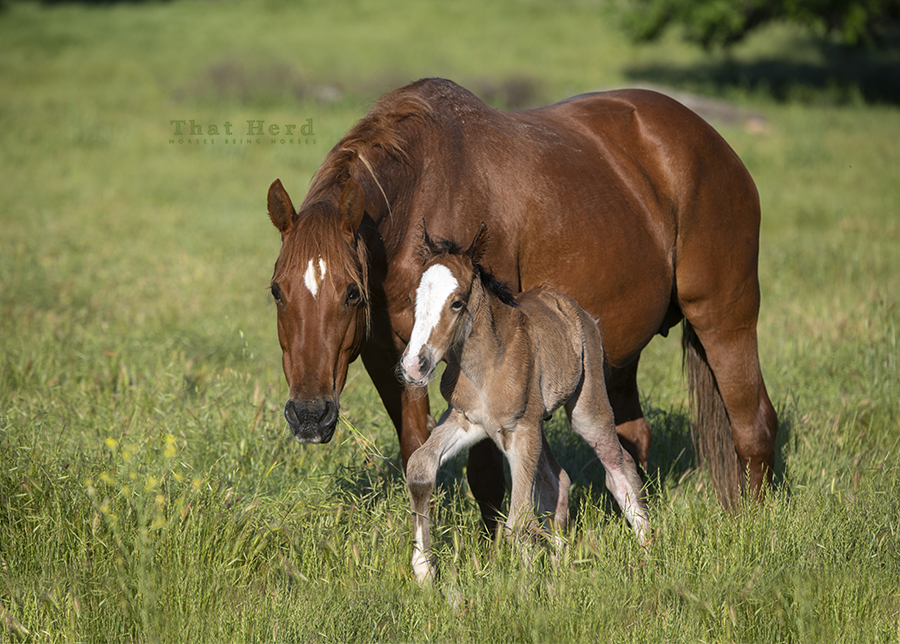 free range horse photography of a beautiful mare and her flashy new colt