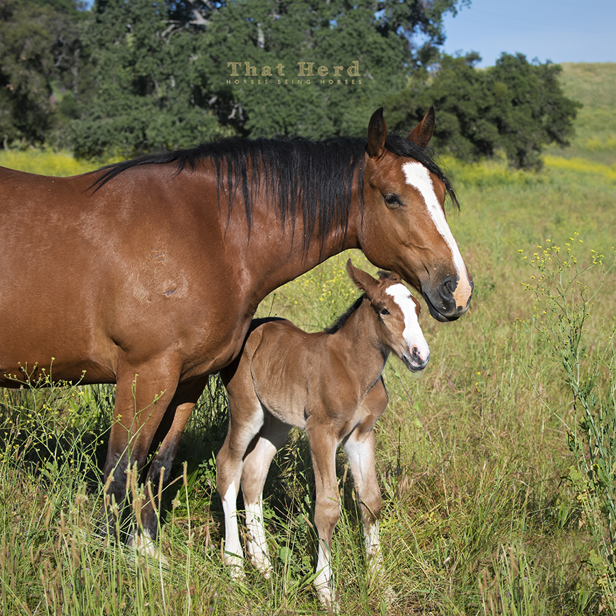 free range horse photography of a devoted mother and her 2020 newborn