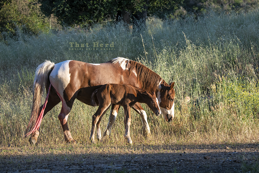 free range horse photography of a badass mare and her newborn foal