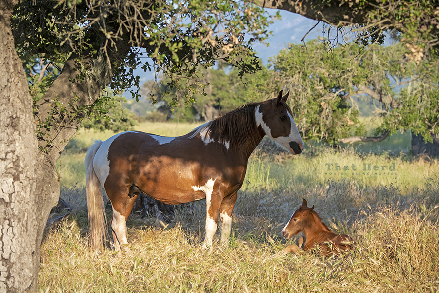 free range horse photography of a badass mare who guarded her new foal with fierce determination.