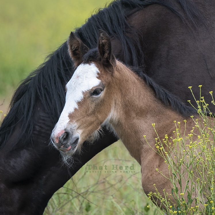 free range horse photography portrait of a day old filly