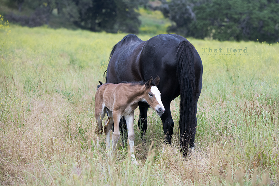 free range horse photography of a new filly