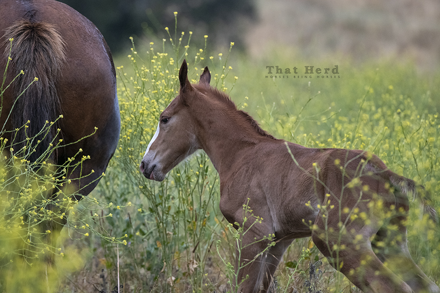 free range horse photography of a very strong new colt