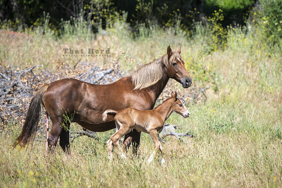 free range horse photography of a moment in the sun for a mare and new baby