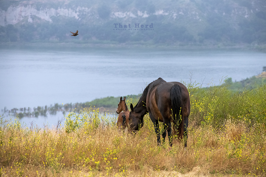 free range horse photography of a mare on a hilltop with her newborn colt